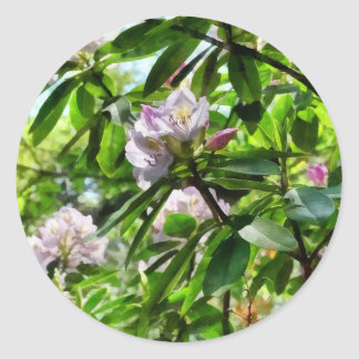 The Rhododendrons Are In Bloom Classic Round Sticker