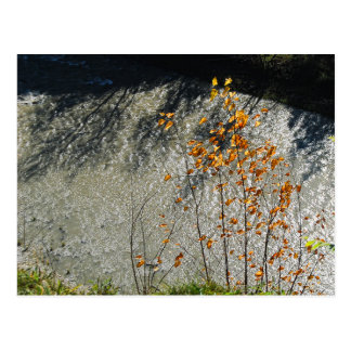 The River Runs Below Postcard
