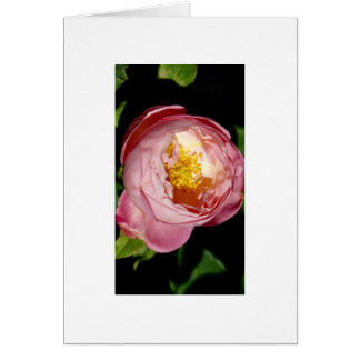 The rose card