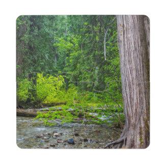 The Ross Creek Cedars Scenic Area Puzzle Coaster