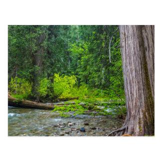 The Ross Creek Cedars Scenic Area Postcard