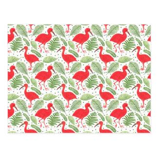 The Scarlet Ibis Postcard