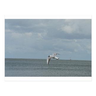 The sea gull and the sea postcard