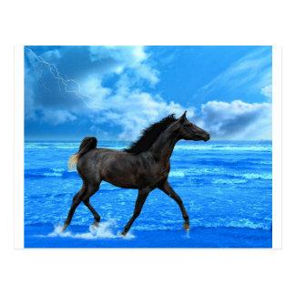 The Sea Horse Postcard