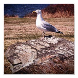 The Seagull print