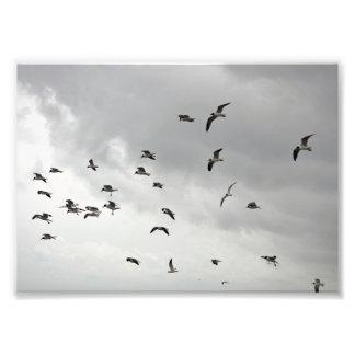 The Seagull Serenade - 5x7 Photo Print