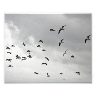 The Seagull Serenade - 8x10 Photo Print