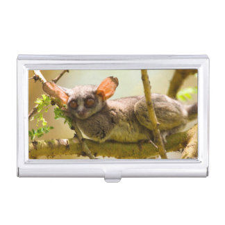 The Senegal Bushbaby (Galago Senegalensis) Case For Business Cards