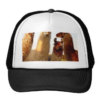 The Short Redhead Trucker Hat