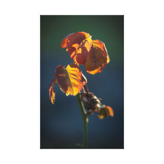The simplicity of the leaves canvas print
