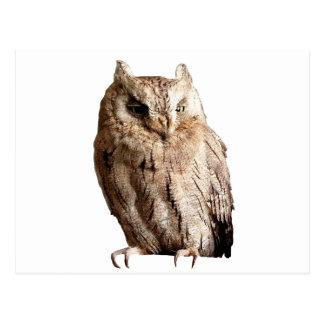 The Sleepy Owl Postcard