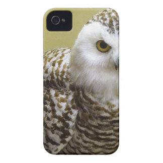 The Snowy Owl iPhone 4 Case