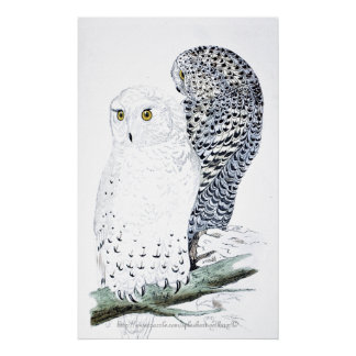 """The Snowy Owl ~official bird of Quebec"" Poster"