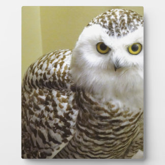 The Snowy Owl Plaque