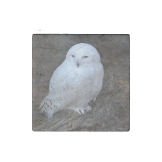 The Snowy Owl Stone Magnets