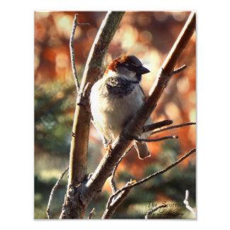 The Sparrow Print