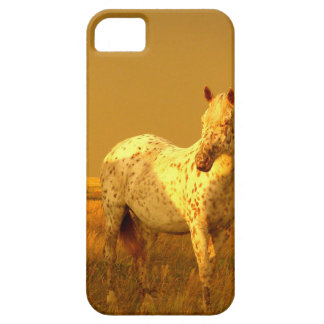 The Spotted Horse In The Golden Glow of A Prairie iPhone 5 Cover