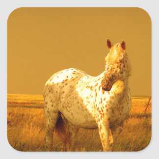 The Spotted Horse In The Golden Glow of A Prairie Square Sticker