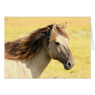 The Stallion Card