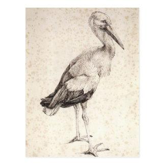 The Stork by Albrecht Durer Postcard