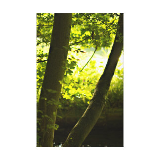 The Summer Trees Canvas Print
