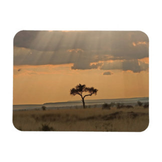 The sun rays lasering through the afternoon rectangular photo magnet