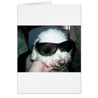 The Sunglass Dog Note Card