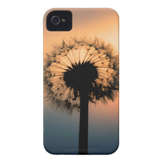 The Sunset and the Fragile Dandelion iPhone 4 Covers