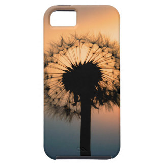 The Sunset and the Fragile Dandelion iPhone 5 Cases