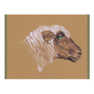 The Surly Sheep Postcard