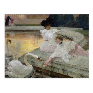 The Swans, 1900 Postcard