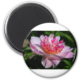The Sweetest Seduction 2 Inch Round Magnet