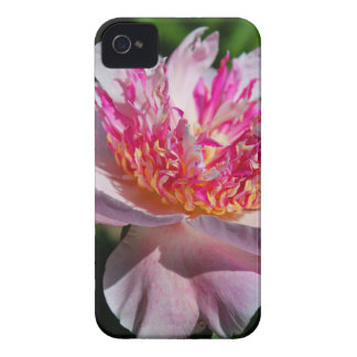 The Sweetest Seduction iPhone 4 Case