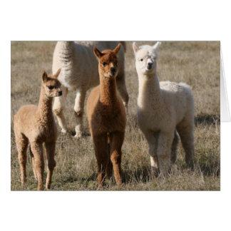 The Three Amigos, Alpaca-Style Card