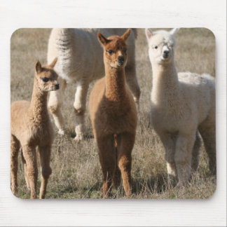 The Three Amigos, Alpaca-Style Mouse Pad