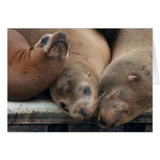 The Three Amigos - California Sea Lions Card