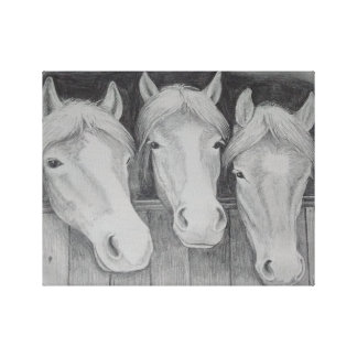 The Three Amigos - the horsey friends Canvas Print