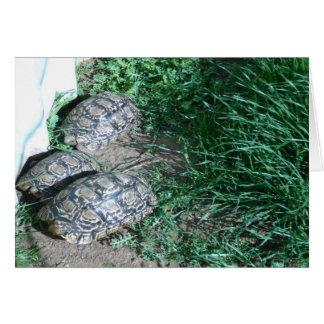 The Three  Tortoises  Card