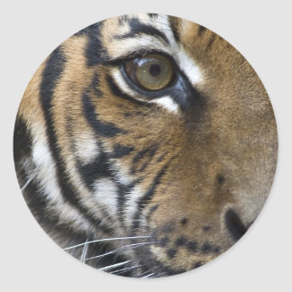 The Tiger's Eye Classic Round Sticker