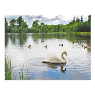 The Tranquil Lake Postcard