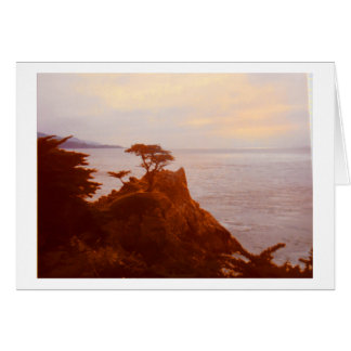 The Tree at Monterey Peninsula, California Card