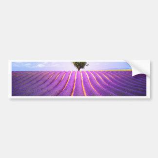 The tree in the lavender bumper sticker