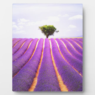 The tree in the lavender plaque