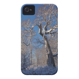 The Tree iPhone 4 Case-Mate Cases