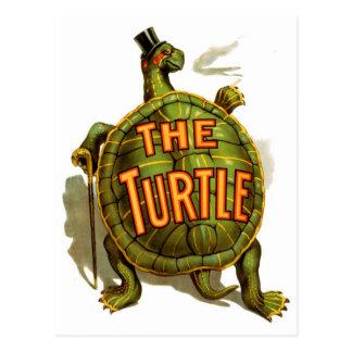 The Turtle Postcard
