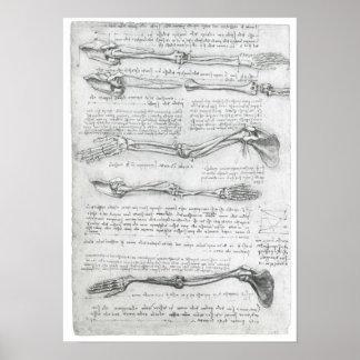 The Upper Extremity, Leonardo da Vinci Poster