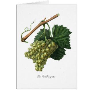 The Verdelho grape Card
