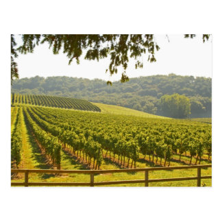The vineyard and a valley with a forest - postcard