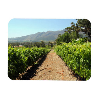 The Vineyards in Franschhoek South Africa Magnets