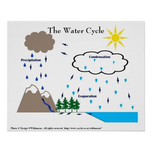 The Water Cycle Poster Zazzle Ca
